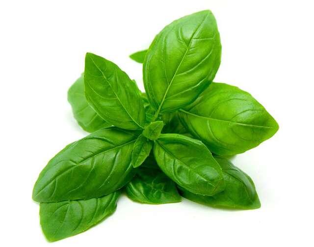 6 pest repellent plants your home needs