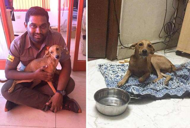 The animal lover who rescued Chennai dog thrown off the terrace