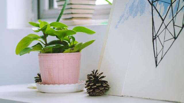 How to rid indoor plants of diseases and pests