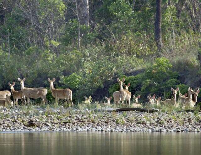 4 wildlife reserves to visit in the monsoons