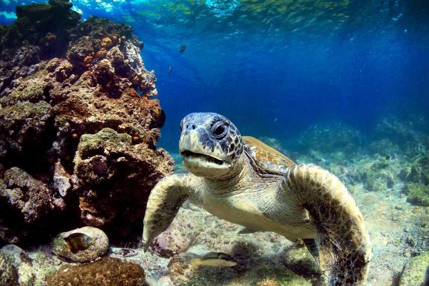 marine-turtle-galapagos