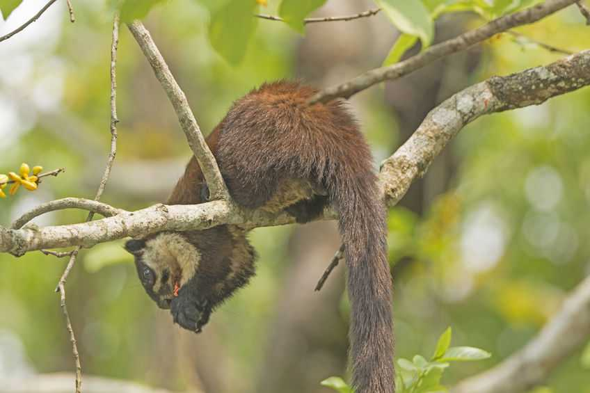 squirrel-in-kaziranga