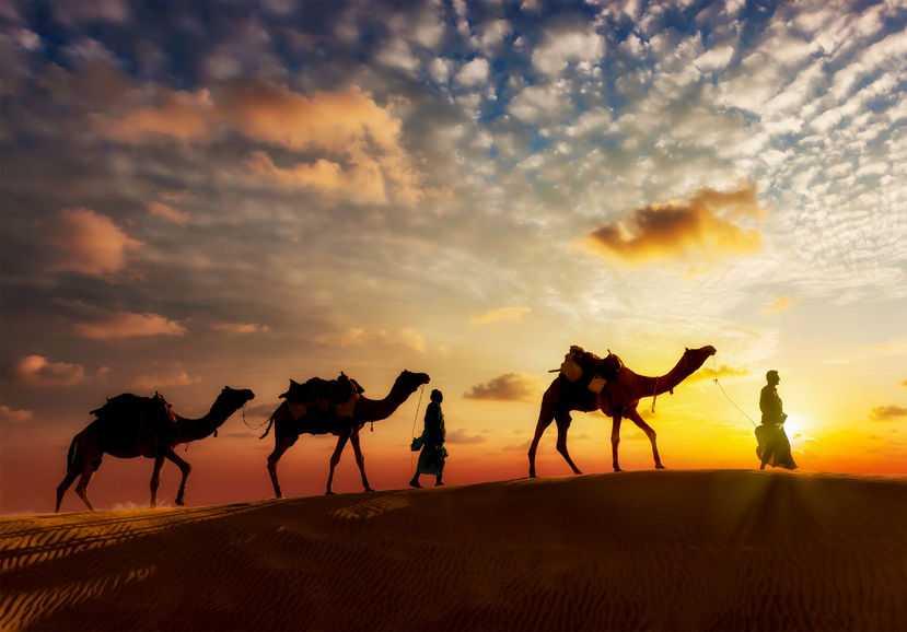 camels, desert