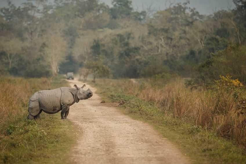 Kaziranga-Assam
