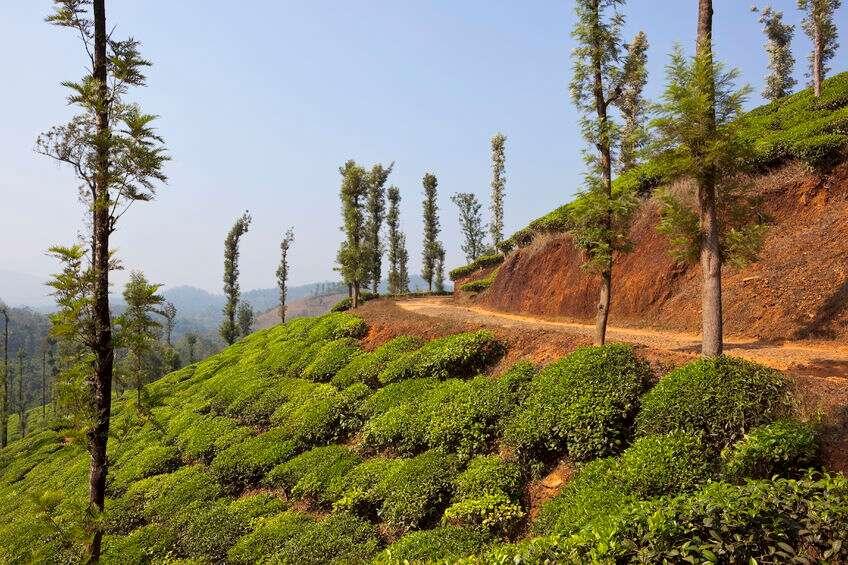 Wayanad Plantations