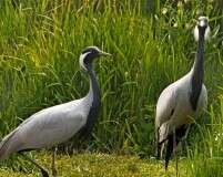 Birding and relaxation in Kinchan and Bhap, Rajasthan
