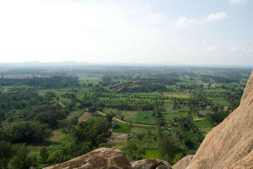Karnataka-paddy