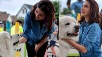 Anushka Sharma and her love for dogs