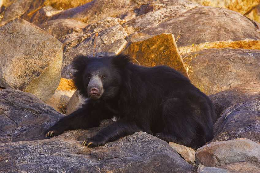 Daroji-Sloth-Bear-Sanctuary-Karnataka