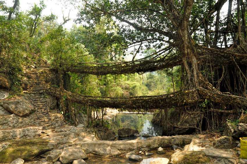 meghalaya root bridge