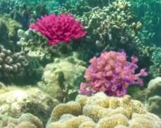 Coral Calcium: Nature's secret to beauty and bones