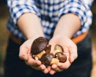 Is mushroom the new skin superfood?