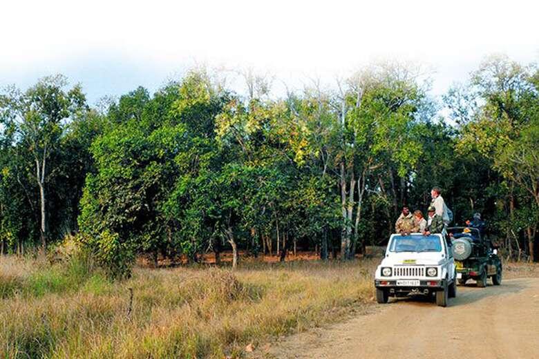 Kanha Jungle Safari.jpg