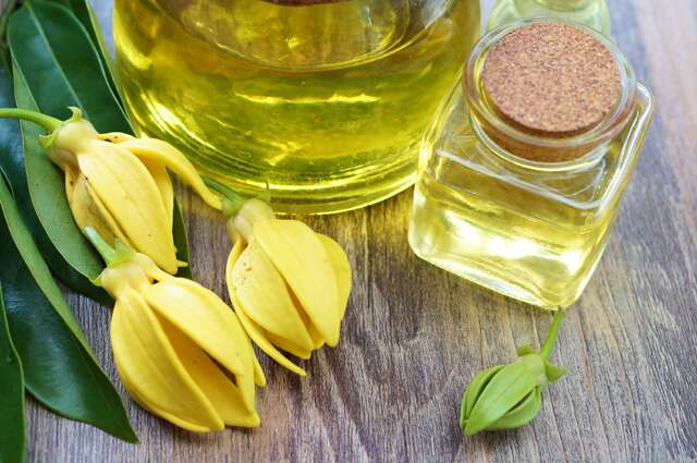Y for Ylang ylang oil