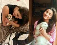 Cats or dogs? Find out these Bollywood celebs' preference