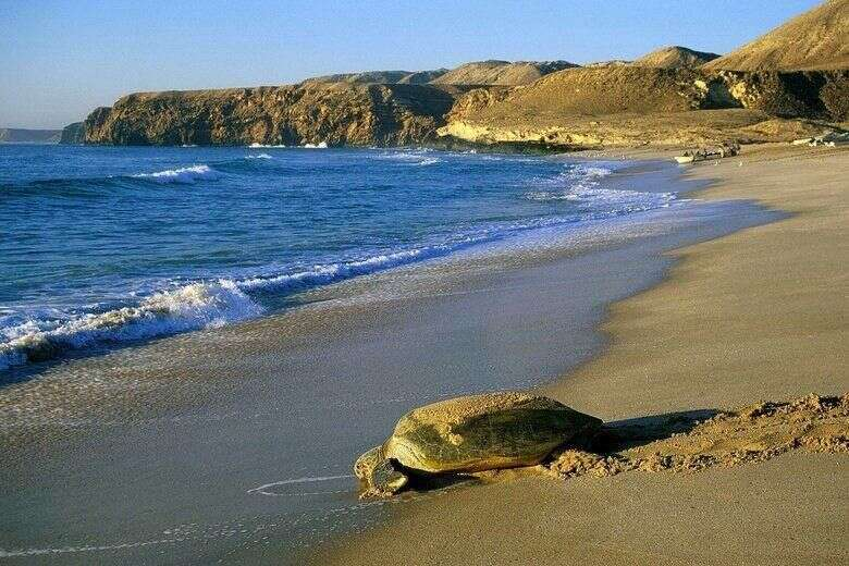 Ras Al Jinz Turtle Reserve.jpg