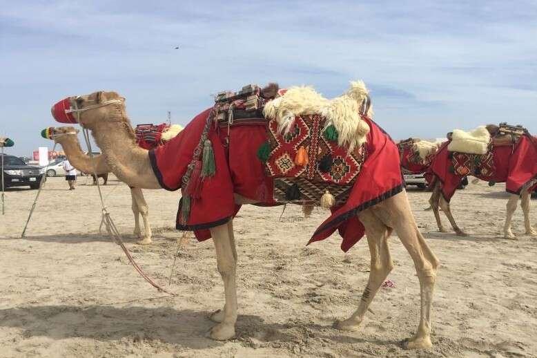 Qatar-Sand dunes