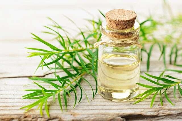 Tea Tree Oil for Hair Treats Dry Scalp