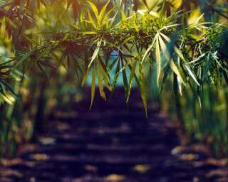 4 Indian Companies Spearheading The Hemp Revolution In The Country