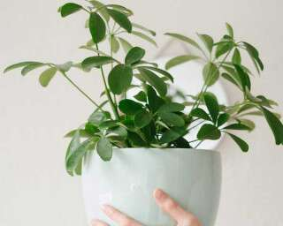 5 Easy And Efficient Plant Care Tips
