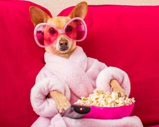 8 Paw-Fect Online Movies For Animal Lovers