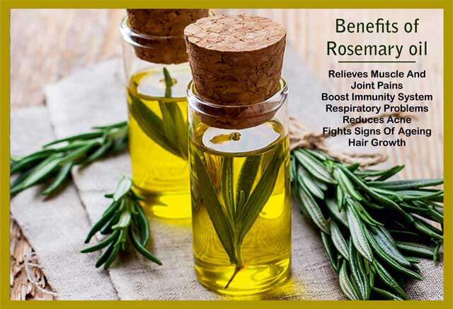 Rosemary Oil: Uses and Health Benefits Infographic