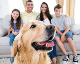 Here's How You Can Use This Time To Take Complete Care Of Your Pets
