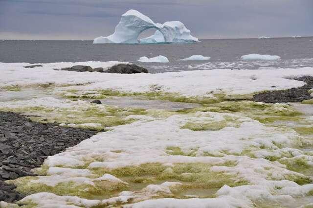 Green Snow Antarctica Climate Change