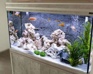 Here Is Why Every Fish Parent Needs To Invest In A Smart Aquarium