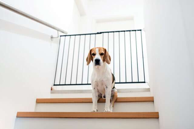 Dog Barriers to the Rescue