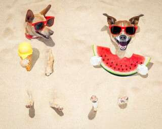 Treat Your Pooches With These Vet-Approved Frozen Treats This Summer
