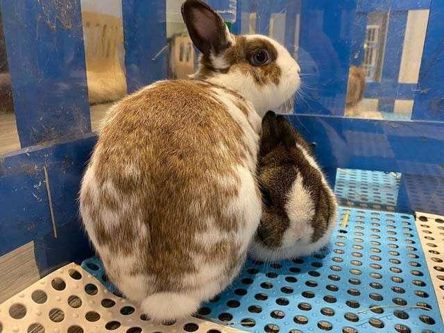 rabbit cafe 0