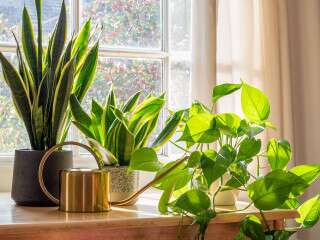 How To Add Greenery To Your Home?