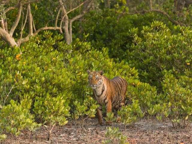 west bengal wildlife - sunderbans