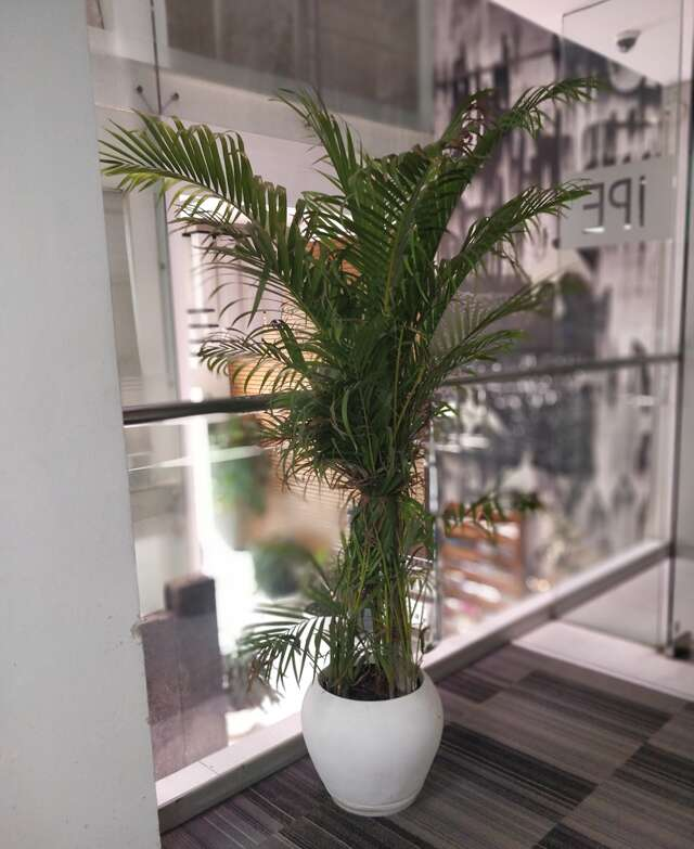 office plant