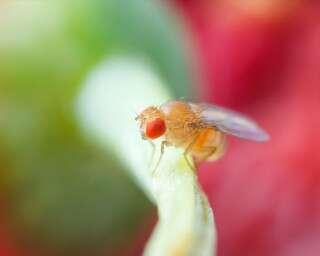 छोटी-छोटी मक्खियों को किचन से कैसे रखें दूर?