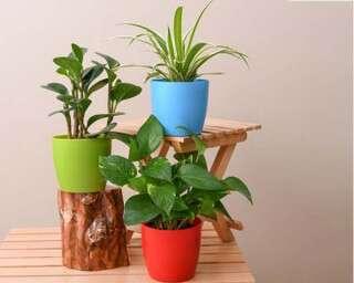 5 पौधे, जो आपके वर्क डेस्क की ख़ूबसूरती बढ़ा देते हैं