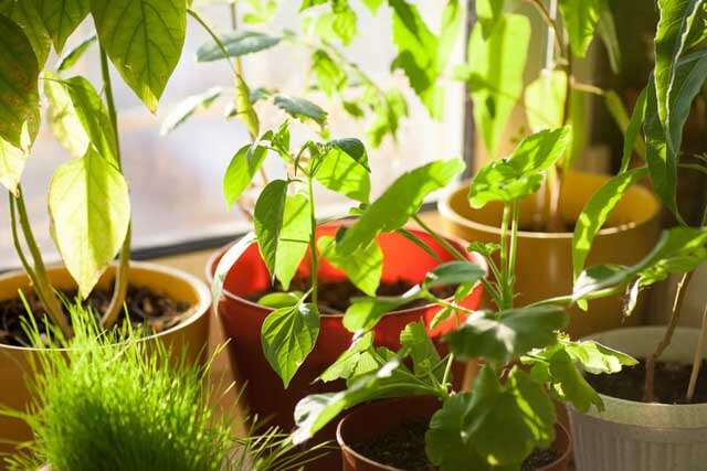 Indoor Gardening: Sunlight, Water and wind for plants