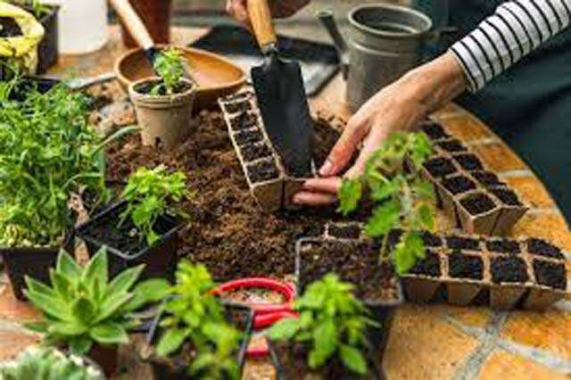 Indoor Gardening: How to grow your indoor garden