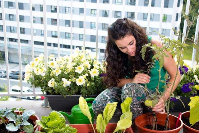 Home gardening as per space in your home