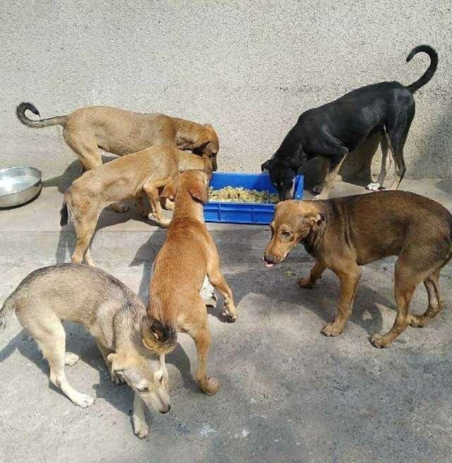 Amidst Lockdown, company Continues to Feed Mumbai's Stray Cats & Dogs