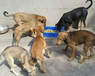 नेक पहल: मुंबई के आवारा जानवरों की भूख कुछ यूं मिट रही है!