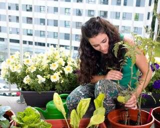 होम गार्डनिंग टिप्स: अपने घर की जगह के अनुसार लगाए ये पौधे
