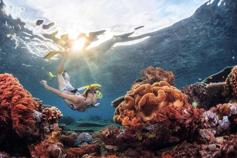 Go snorkelling
