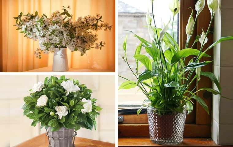 These plants will make your home smell good - Scented indoor plants that give your home a great fragrance ...