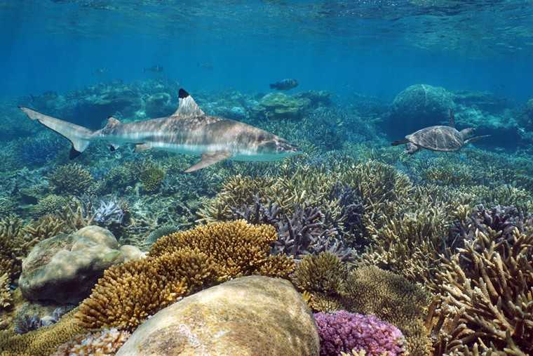 Swim through gorgeous coral reefs