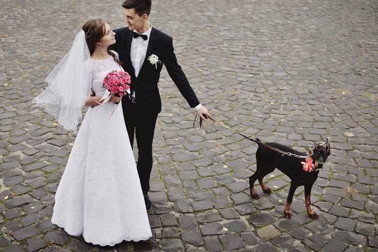 Pets part of the bridal troupe