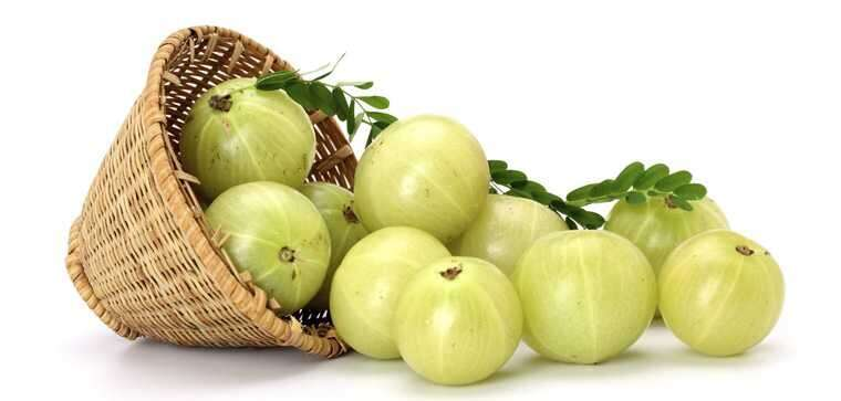 gooseberry or amla for Hair